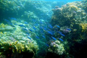 Die Korallen im Roten Meer von Ägypten überzeugen