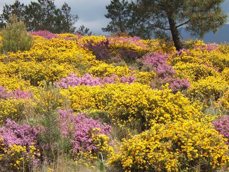 Die Lüneburger Heide überzeugt durch lilanen Farbmix