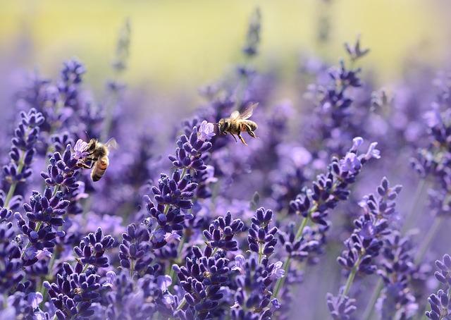 Bienen in Deutschland