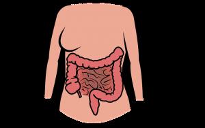 Darm Probiotika