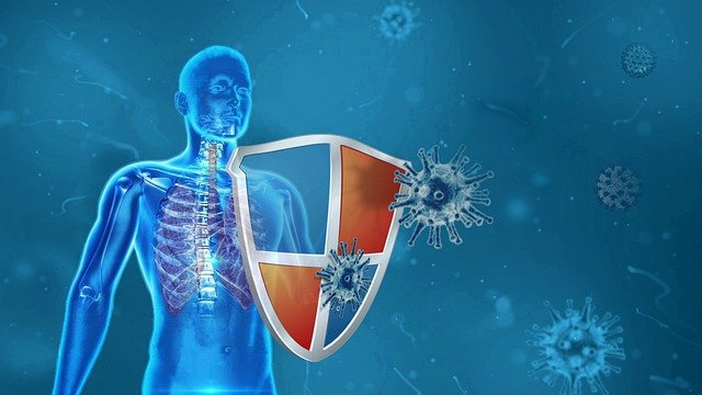 Immunsystem Abwehrkräfte