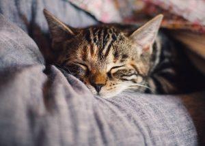 Immunsystem Schlaf